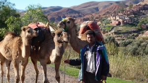 Camels at Douar Azrou