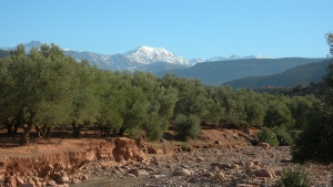 Olive groves below Kasbah Angour